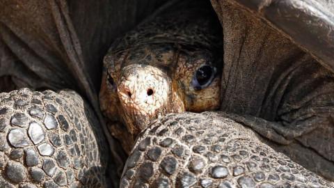 Hello, tortoise!