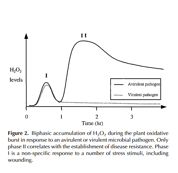 Biphasic accumulation of H2O2 during the plant oxidative burst in response to an avirulent or virulent microbial pathogen.